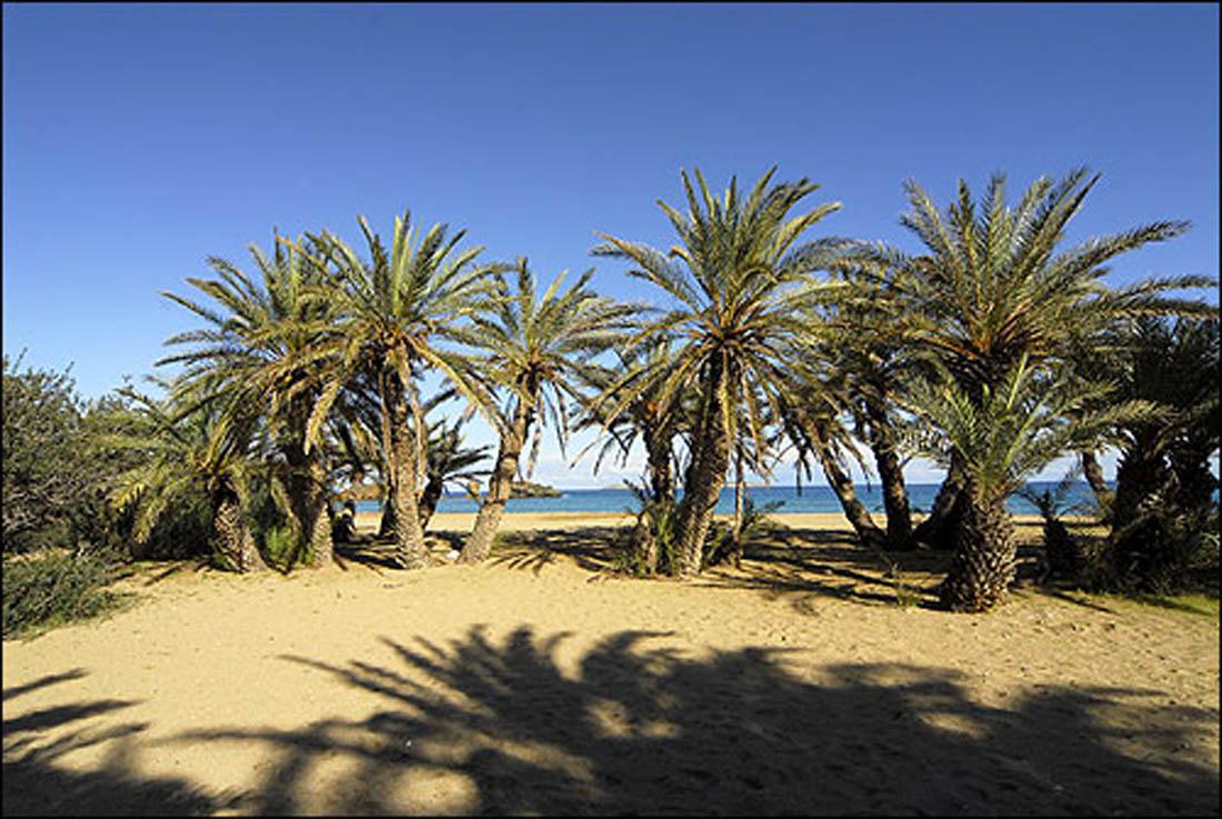 Rental Car Places >> Vai - Travel at Crete